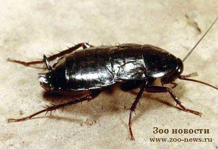 Кармен Сильва. а я тараканов боюсь.