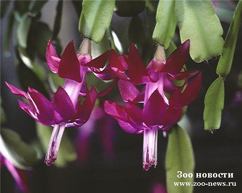 Какие цветы зимой